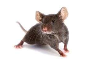 mice_21